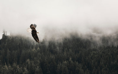 Being an Eagle